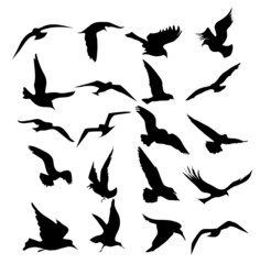 Flying Birds set-vector