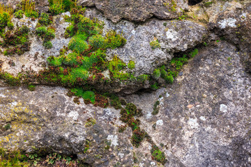 wall of stones with moss