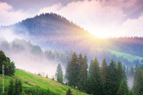 природа рассвет деревья  № 1158267 бесплатно