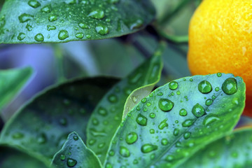 green laeves & waterdrops