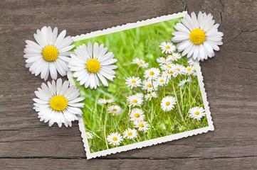 Endlich Frühling, Frühlingsgefühle, Blumenwiese