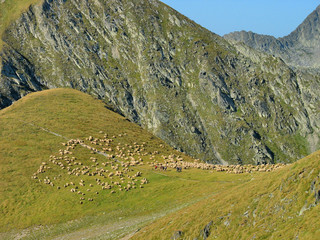 Alpine Landscape with Flock of Sheep
