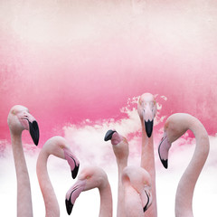 Foto op Canvas Flamingo pink flamingo background