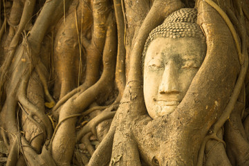 The Head of Buddha in Wat Mahathat, Ayutthaya, Thailand.