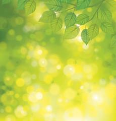 Vector green leaves on sunshine background.