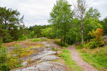 Forest. Sweden