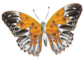 Farfalla 4 Giuseppe