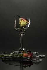 Broken wineglass with dry flower on grey background
