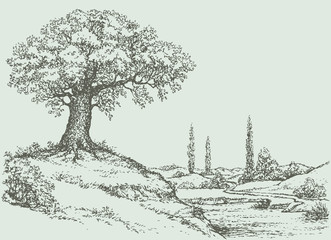 Vector landscape. Oak tree on the hill