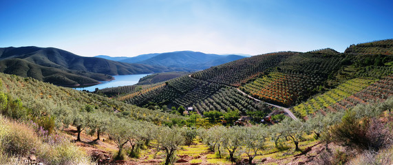 Foto op Aluminium Olijfboom Plantation fields and lake near the village of La Pesga