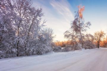 Poster Lavendel Sunset in winter field
