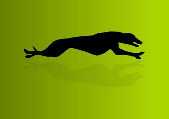 Windhund Greyhound Silhouette