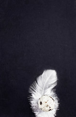 Blank blackboard with white feather and copy space for text, clo