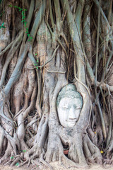 Head of Buddha in Wat Mahathat, Ayutthaya, Thailand