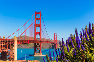 Papiers peints San Francisco Golden Gate Bridge San Francisco purple flowers California