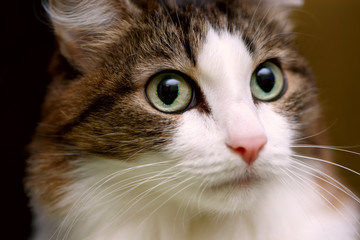 close up on a cat's face