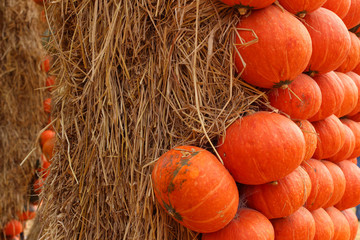 many pumpkin