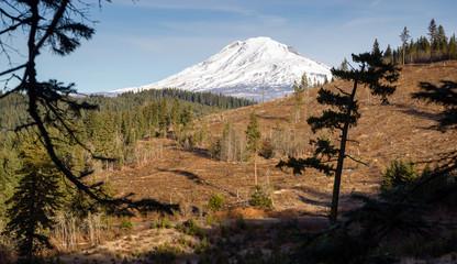 Adams Forest Clear Cut Logging Slash Land Devastation