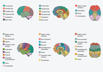 Human brain anatomy, function area, mind system