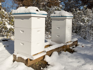 Winter Beehives