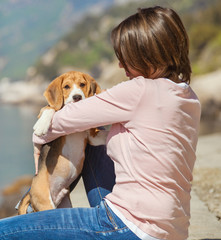 Little beagle puppy with woman