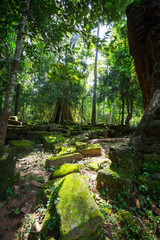 Tree in Angkor