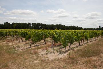 Wall Mural - panorama du vin