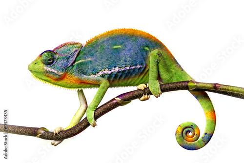 Wall mural chameleon
