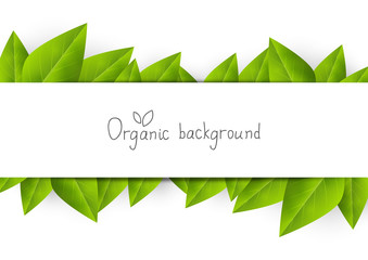 Organic background with green leaves