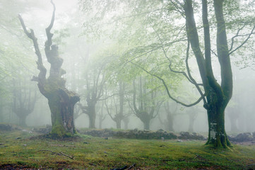 Wall Mural - forest with fog