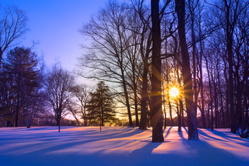 Sunset through trees on snowy landscape