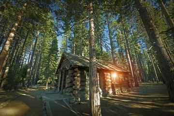 Aged Forest Cabin