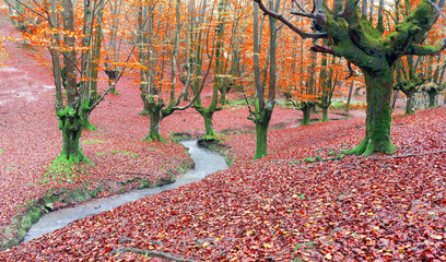 Wall Mural - forest in autumn with a stream