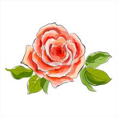 Beautiful red rose. Stylized watercolor illustration