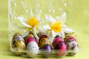 Easter card : eggs with flowers - holiday box with Narcissuses