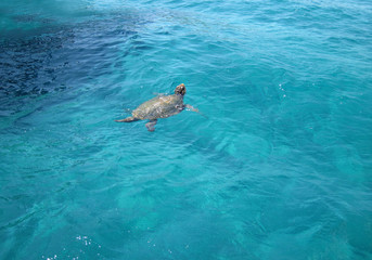 Caretta-Caretta Sea turtle on Zante island, Laganas, Greece