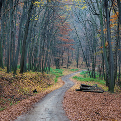 beautiful forest road