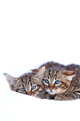Two baby wildcats