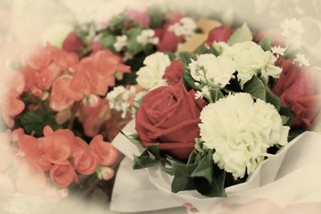 Valentines rosea flower in vintage style,selective focus