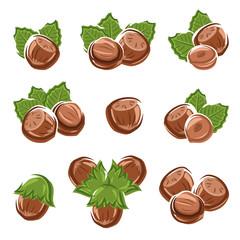 Hazelnut nuts set. Vector