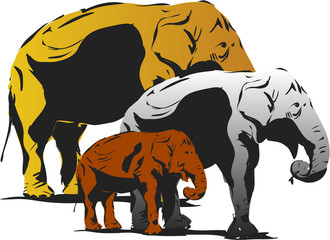 3 elephant, black and white illustration