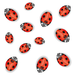 Seamless background. Ladybugs on white.