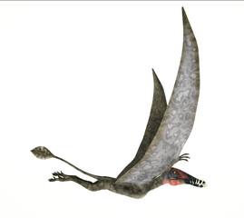 Dorygnathus flying Dinosaur photorealistic representation, side