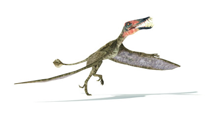 Dorygnathus flying Dinosaur photorealistic representation, take