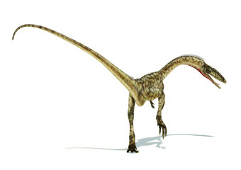 Coelophysis dinosaur photorealistic representation. On white bac