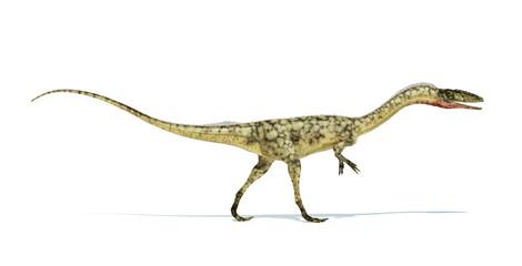 Coelophysis dinosaur photorealistic representation. On white bac
