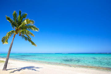 Wall Mural - Paradise beach and palm tree  in tropical island