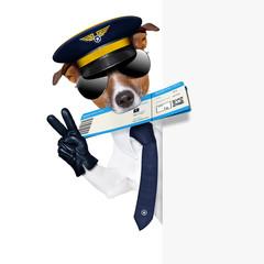 check in dog