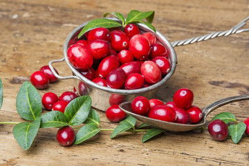 still life with cranberries
