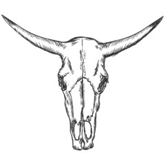 vector sketch illustration - old  cow skull